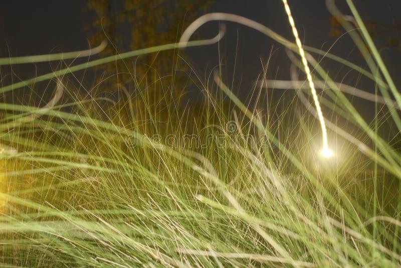 Вереск луга света и травы стоковые изображения rf