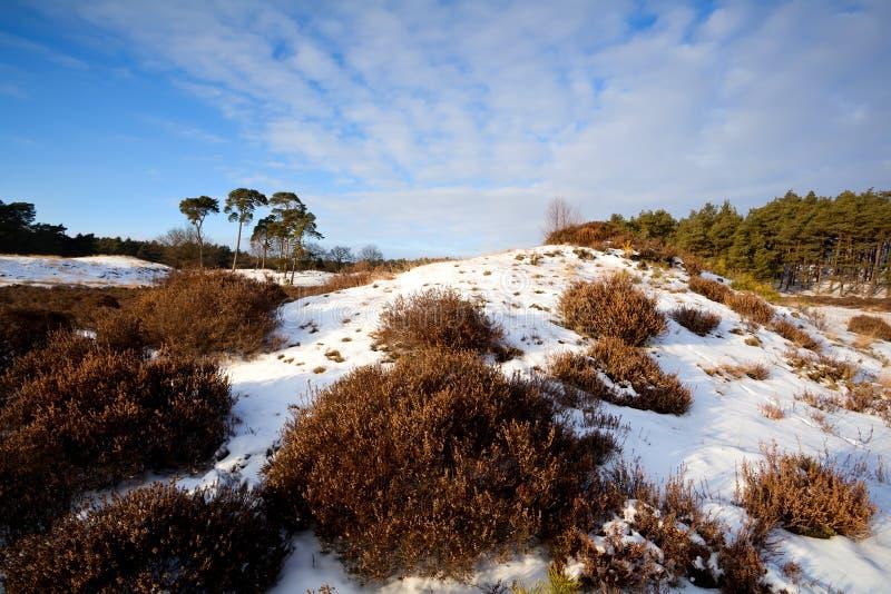 Вереск на холме в зиме стоковая фотография