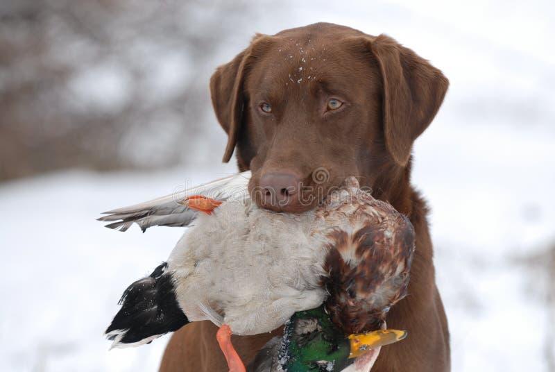 верный охотник