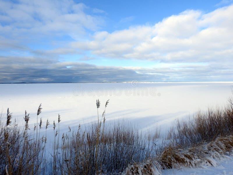 Вертел в зиме, Литва Curonian стоковое фото