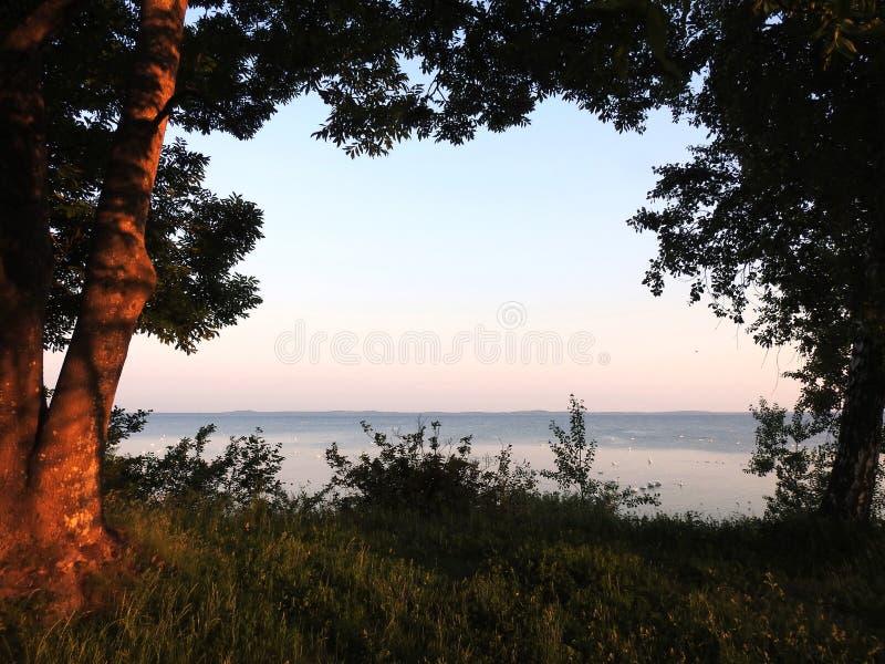 Вертел в раннем утре, Литва деревьев и Curonian стоковое фото rf