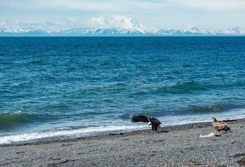 Вертел почтового голубя, Аляска стоковые изображения