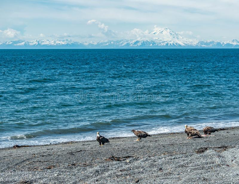 Вертел почтового голубя, Аляска стоковые фото