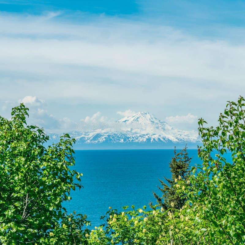 Вертел почтового голубя, Аляска стоковое изображение rf
