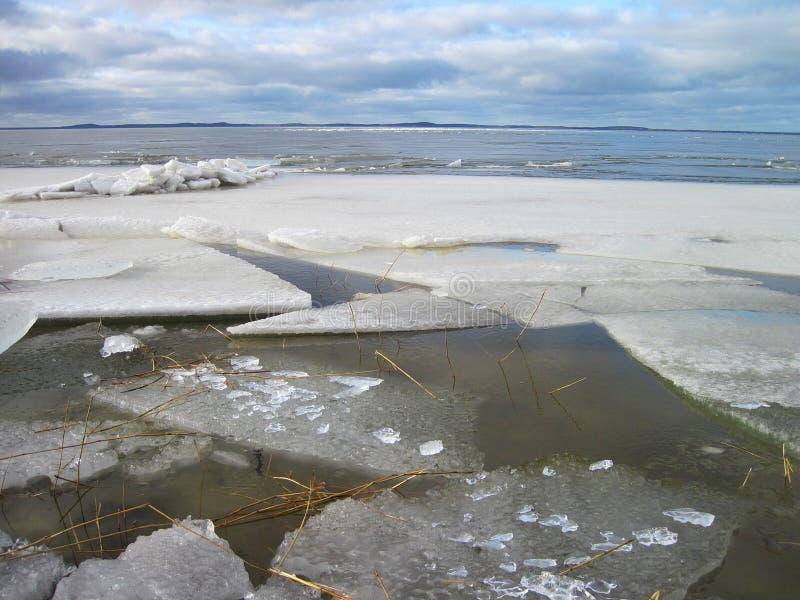 Вертел Curonian в льде зимы, Литве стоковые изображения rf