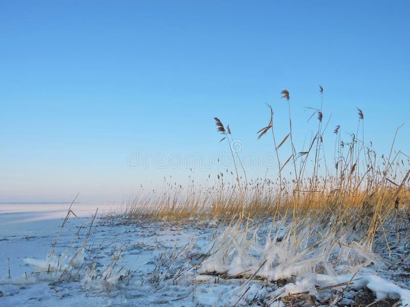 Вертел в зиме, Литва Curonian стоковая фотография