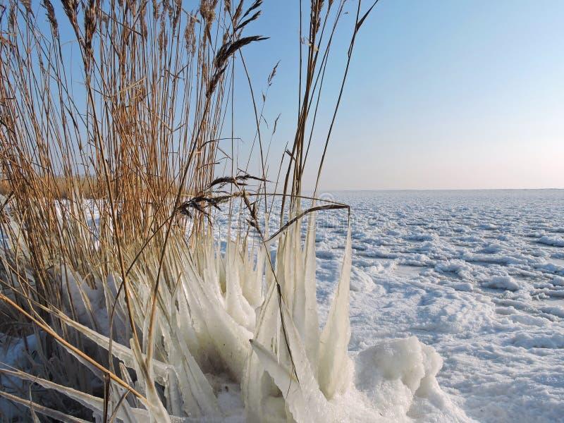 Вертел в зиме, Литва Curonian стоковое изображение