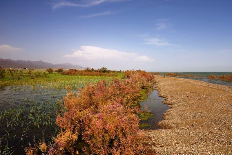 Вертел Sandy на озере стоковое фото
