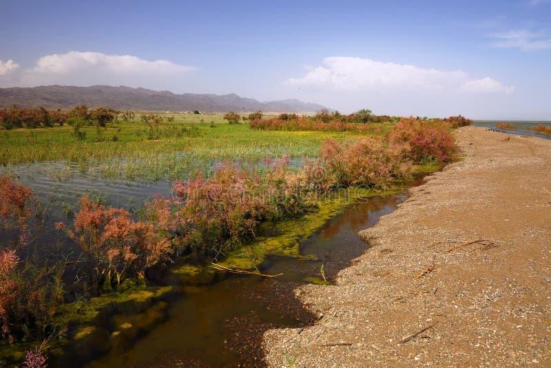Вертел Sandy на озере стоковые фото