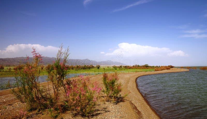 Вертел Sandy на озере стоковое изображение rf