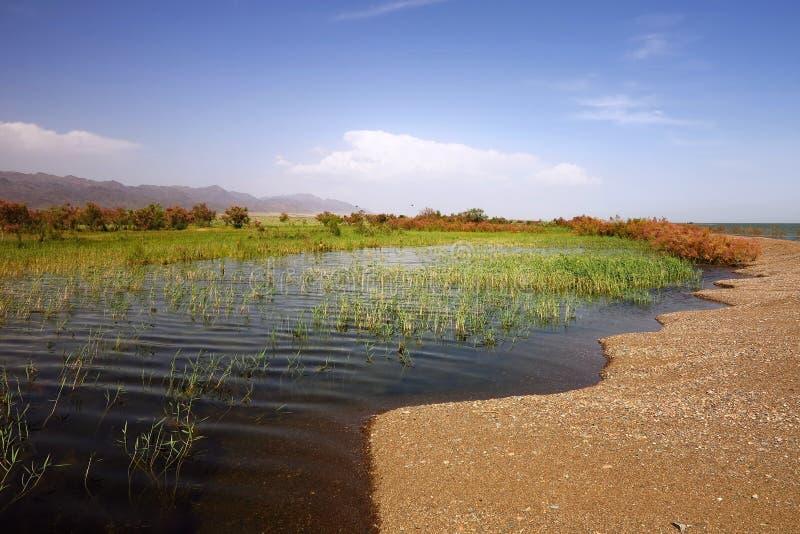 Вертел Sandy на озере стоковая фотография