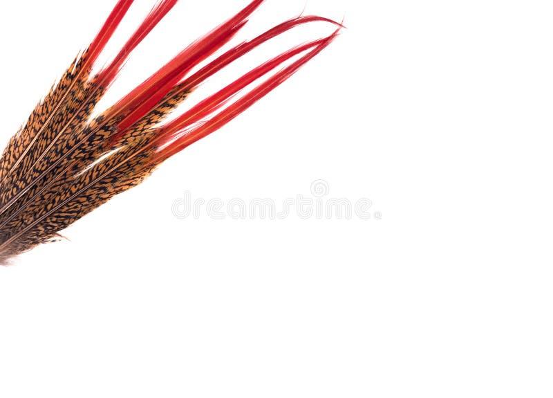 Вертикальная предпосылка Пер покрашенные Motley с красной законцовкой стоковые фото