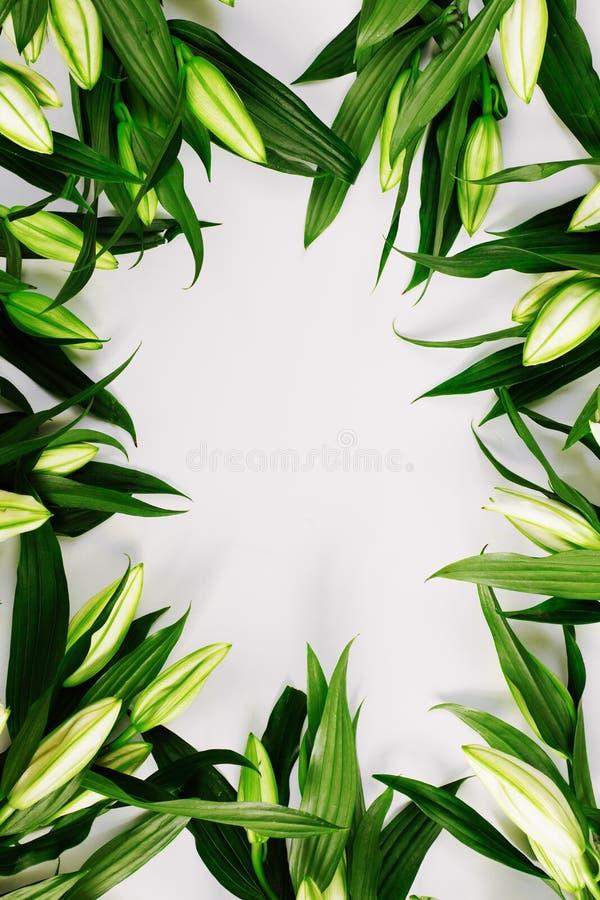 Вертикальная рамка зеленых лилий на белом фоне Плоская квартира, вид сверху, копировальное пространство стоковое фото rf