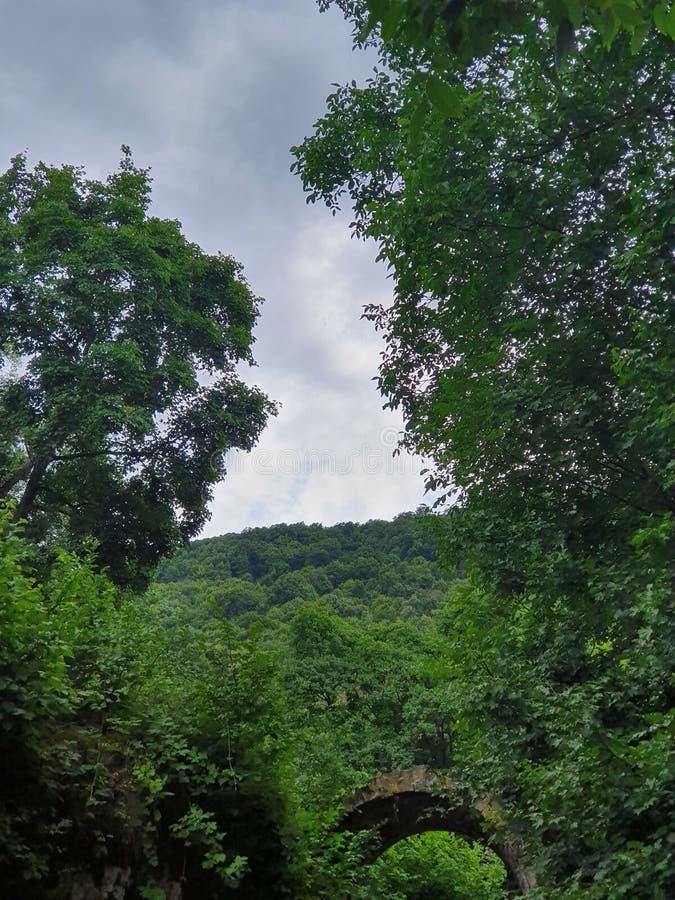 Вертикальная съемка красивой растительности в лесе с небольшим открытым тоннелем ниже стоковое фото