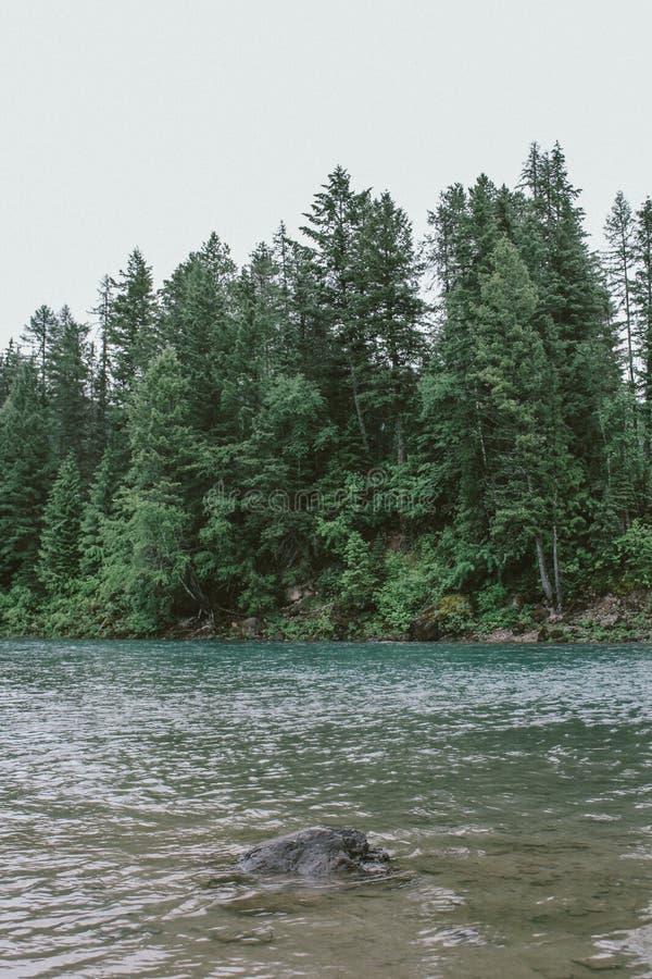 Вертикальная съемка утеса в воде ясной лес с высокими деревьями на национальном парке ледника, Монтане стоковое фото