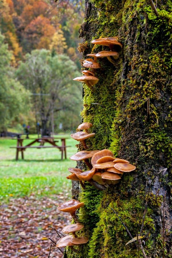 Вертикальные грибы на зеленом хоботе стоковые фотографии rf
