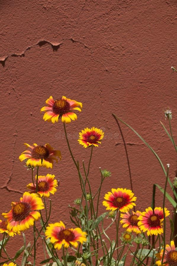 Вертикальный индеец укрывает стена againstadobe wildflowers, Mesilla NM стоковые фото