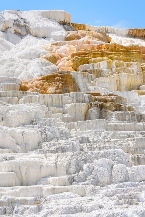 Вертикальный крупный план весны палитры, террасы травертина, Mammoth Hot Springs, парка Йеллоустона, США стоковые изображения