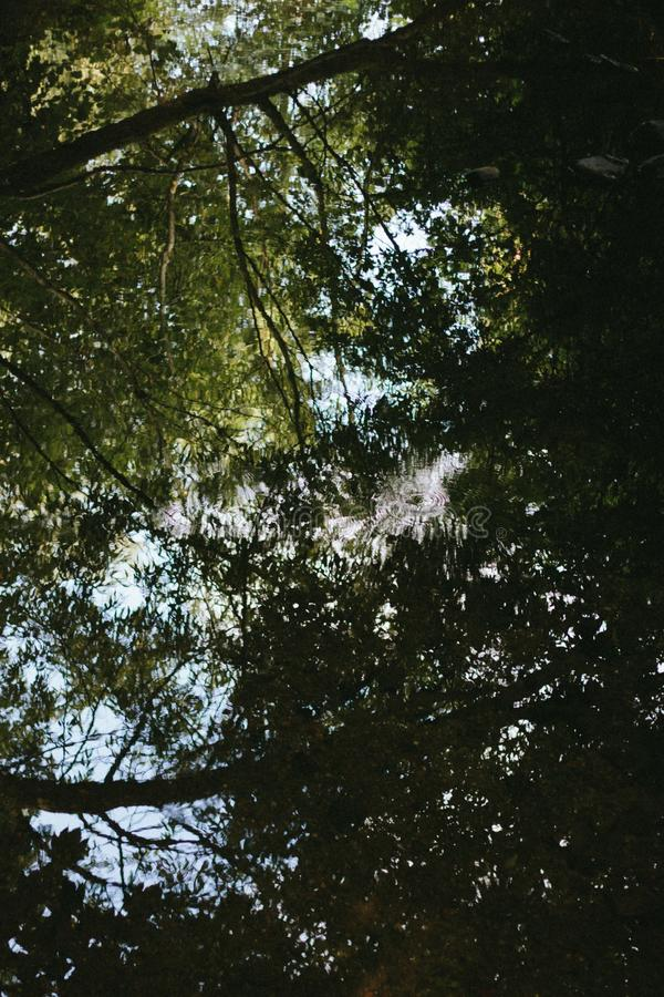 Вертикальный низкоугольный выстрел деревьев в городе Вольвергемптон Великобритании стоковое фото