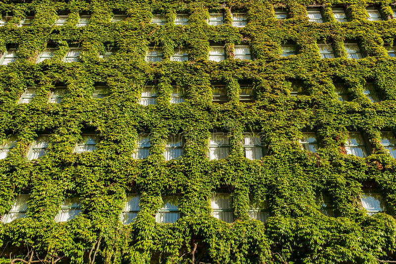 Вертикальный сад на стене стоковое изображение rf