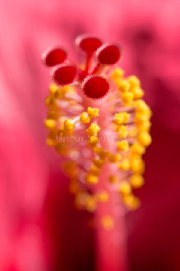 Вертикальный флористический запачканный цветок красного цвета Hibiskus предпосылки стоковые изображения