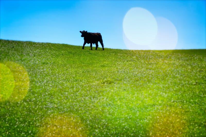 вертикаль выгона зеленого цвета коровы состава стоковые фотографии rf