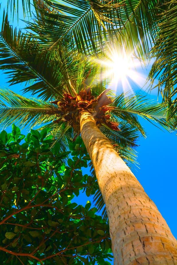 Вертикальная предпосылка Солнця над зеленой ладонью выходит на предпосылку Мальдивов абстрактную стоковые изображения rf