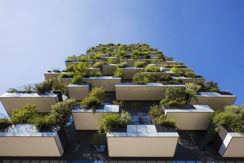 Вертикальный лес стоковая фотография
