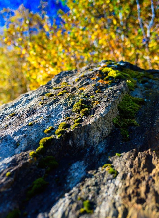Вертикальный живой мох Норвегии на bac предпосылки bokeh природы утеса стоковое фото