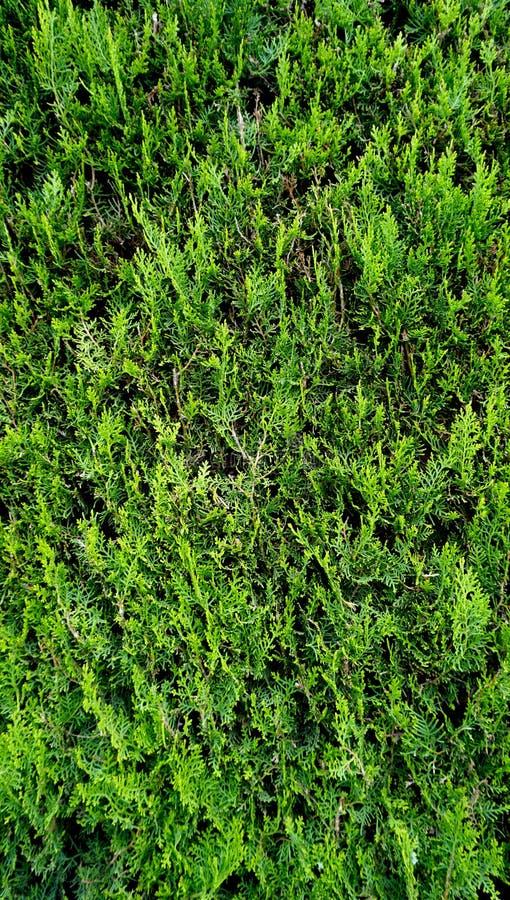 Вертикаль загородки зеленого растения стоковые изображения