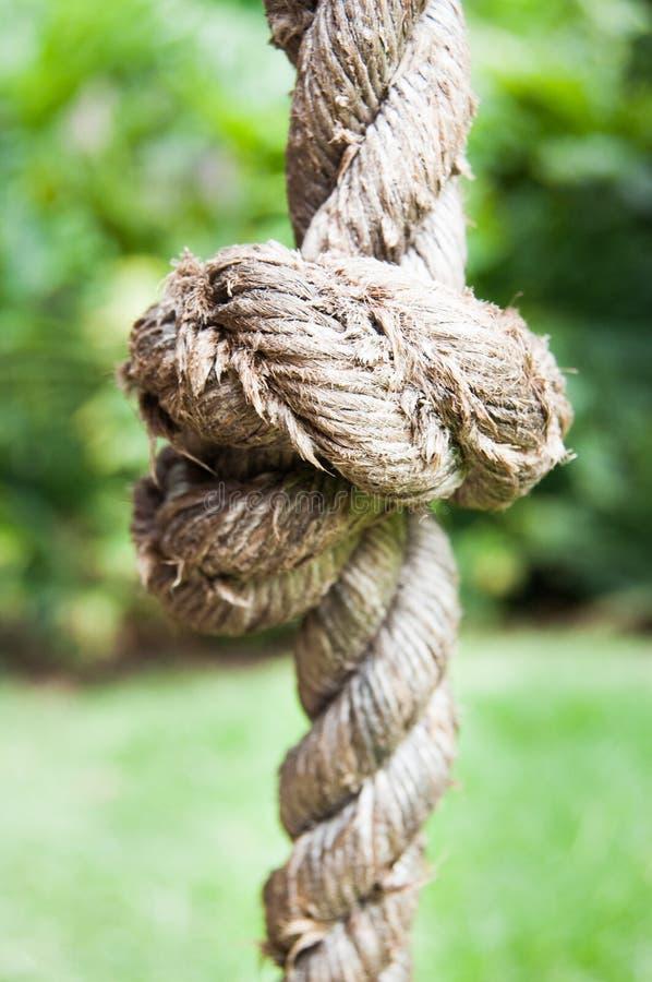 Вертикаль сада узла веревочки стоковая фотография rf