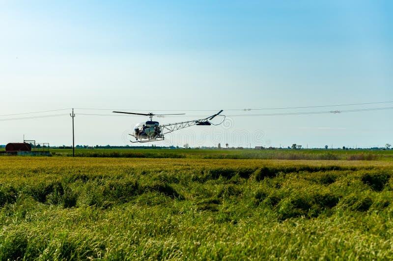 Вертолеты распыляют пестициды, летающие над рисовыми полями в сельской местности в ясный солнечный день и голубое небо стоковые изображения