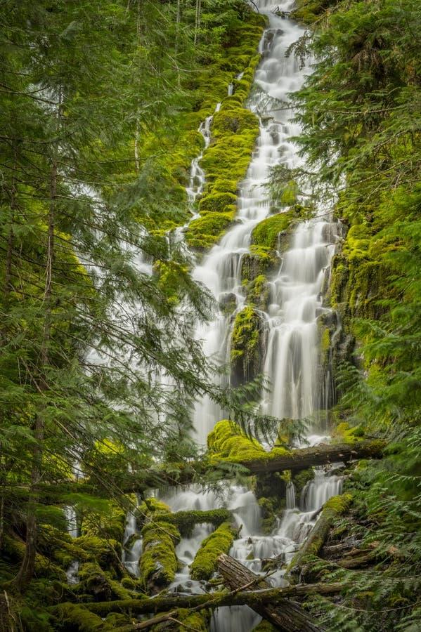 Верхнее полномочие понижается подачи через толстый лес стоковые изображения rf
