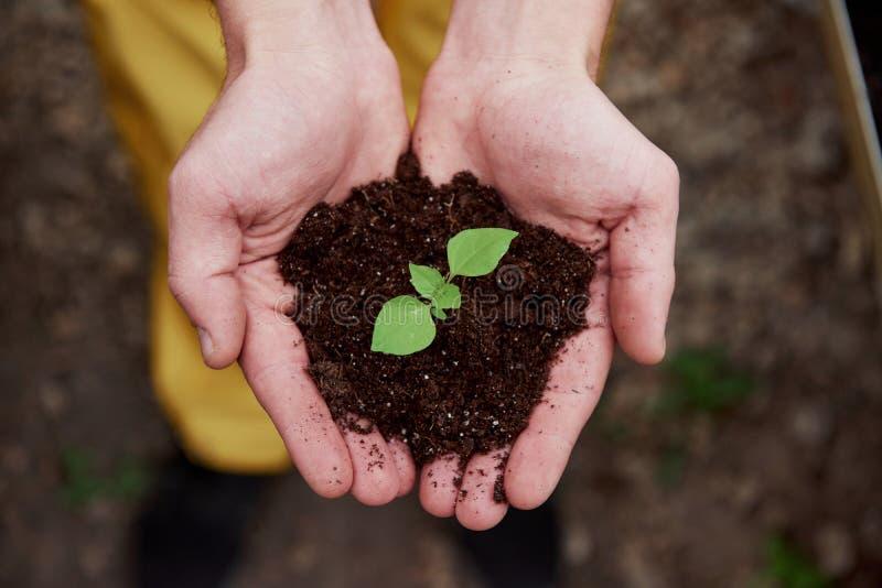 Верхнее представление Менсы держат землю за руки, а растение в середине мало стоковая фотография