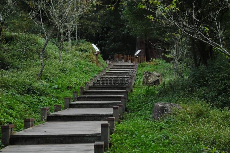 Верхние лестницы с зеленым густолиственным лесом в Тайване стоковое фото