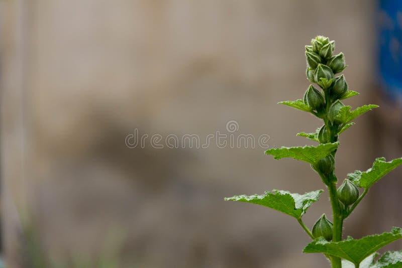 Верхние зеленые цветки зацветают стоковые фотографии rf