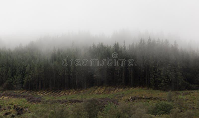 Верхние части горы крышки облако нижнего яруса стоковое изображение rf