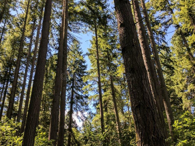 Верхние части дерева стоковые фотографии rf