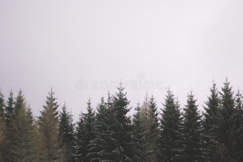 Верхние части дерева стоковые изображения