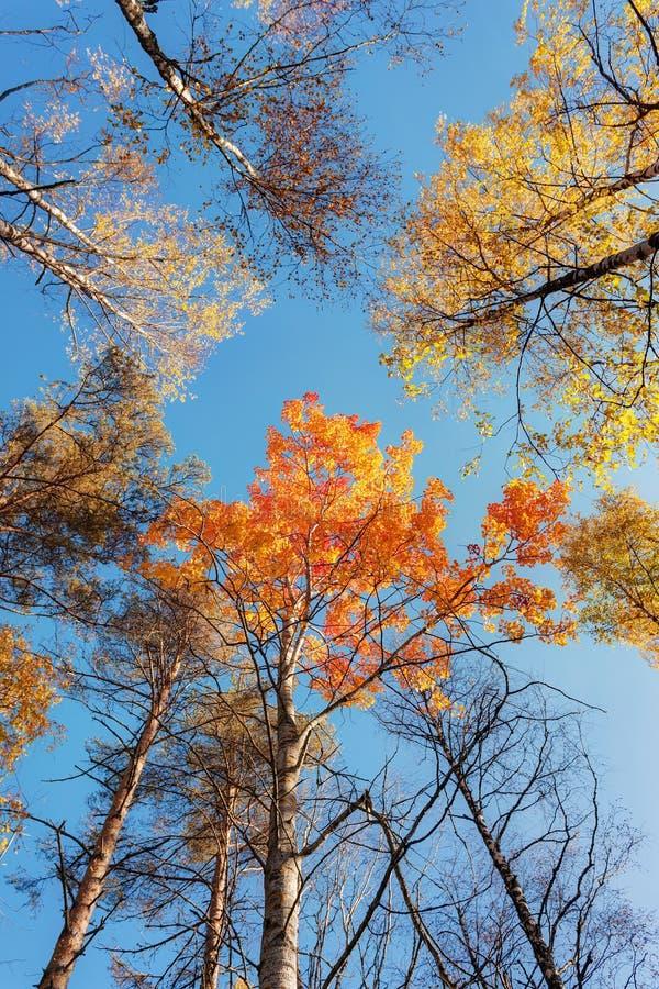 Верхние части деревьев осени стоковое изображение
