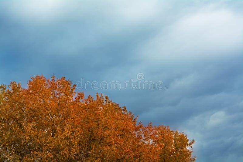 Верхние части деревьев осины в осени стоковые изображения