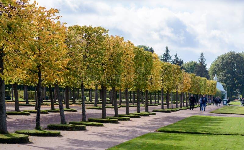 Верхний сад Peterhof украшен с зацветая зеленым бульваром липы, который в сезоне осени будет ярким желтым цветом стоковое фото