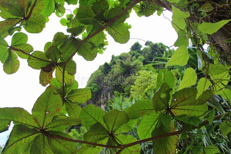 Верхнюю часть горы можно увидеть через крону дерева стоковые изображения