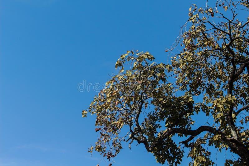 Верхняя часть высокого дерева в парке, красивый солнечный день стоковая фотография