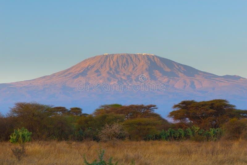 Верхняя часть горы kilimanjaro в восходе солнца стоковые фото