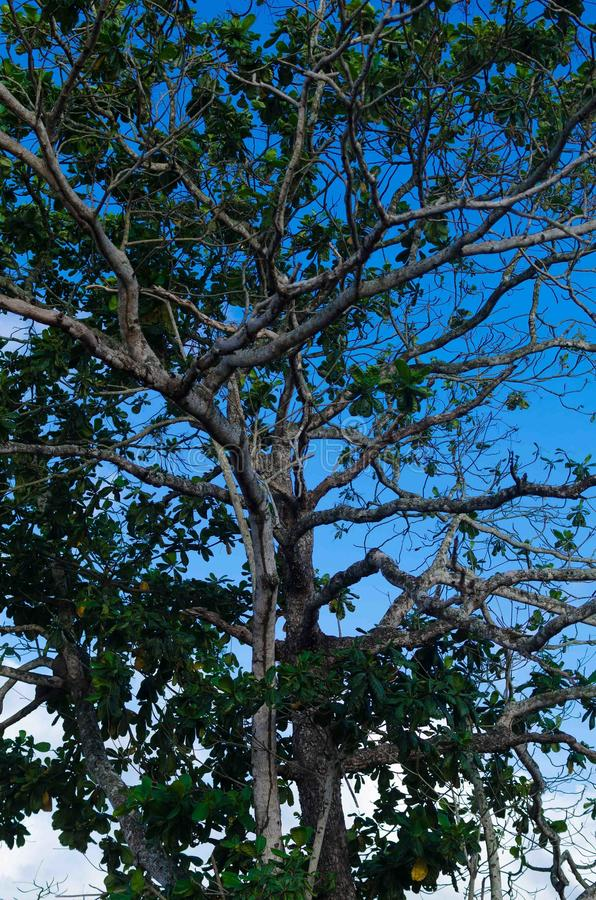 Верхняя часть дерева и голубое небо стоковые изображения