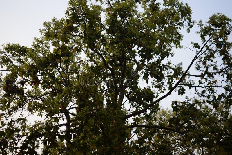 Верхняя часть дерева соли принятого от очень дна выглядя красивый стоковое фото rf