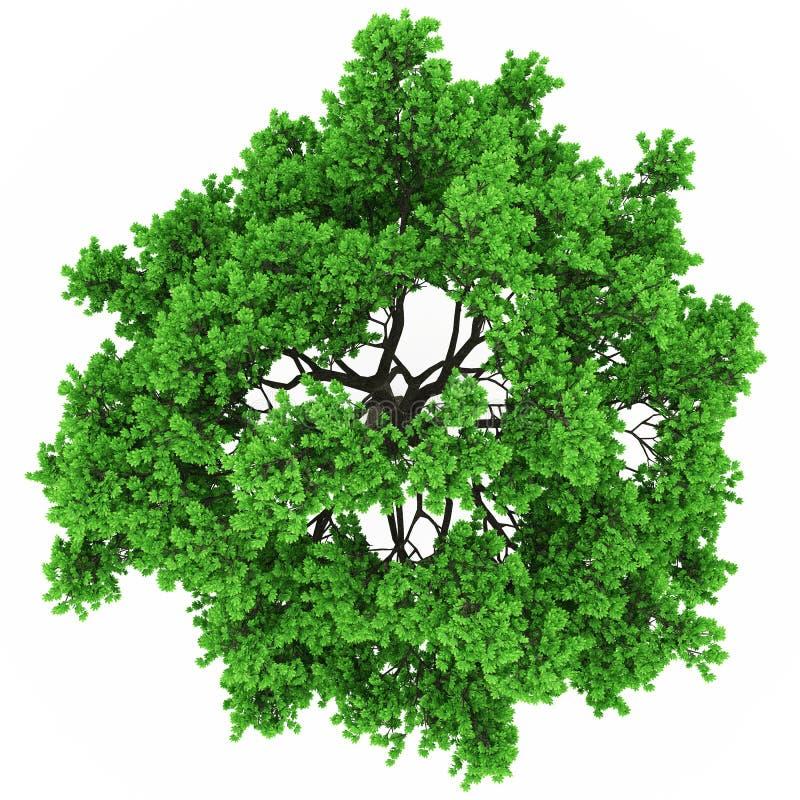 Взгляд сверху дерева иллюстрация штока