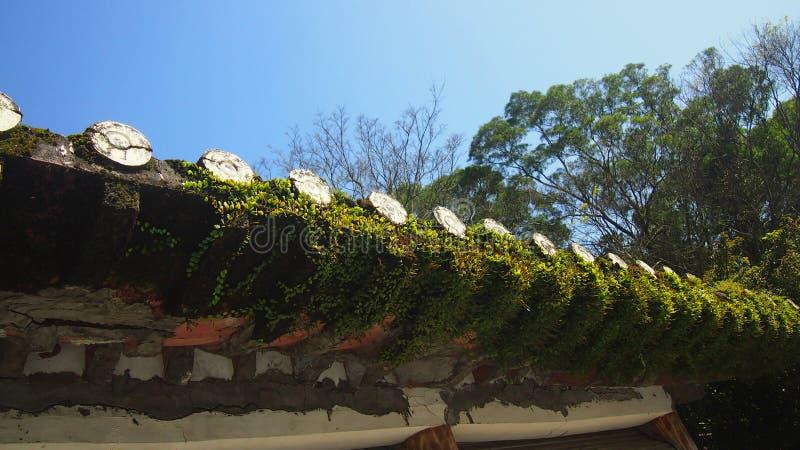 Верхняя часть крыши мхов восточная строя стоковые фотографии rf