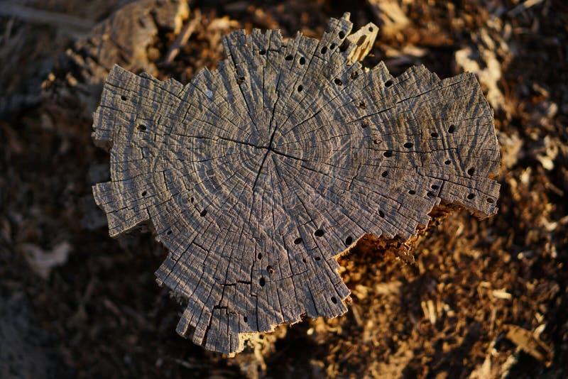 Верхняя часть прерванного дерева стоковые фото